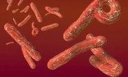 Полювання на Еболу